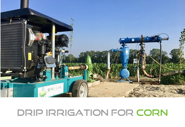 Drip irrigation for corn