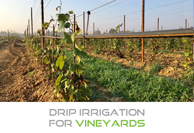 Drip irrigation for Vineyards